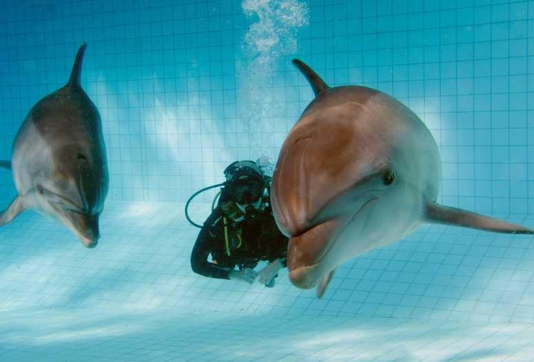 Дайвинг_с_дельфинами,_Дельфинарий_в_Набережных_Челнах