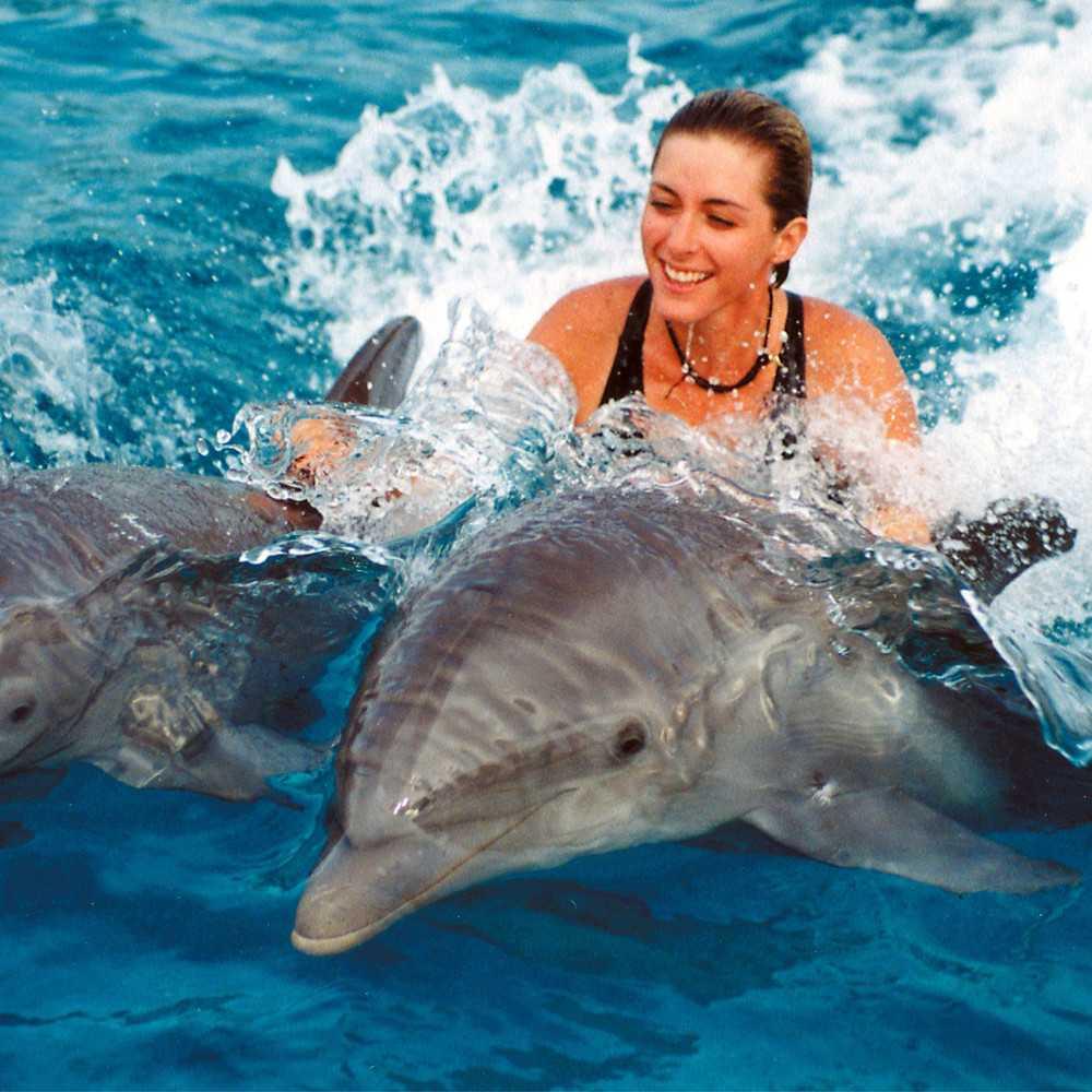 что гладить дельфина во сне стоимость поездки